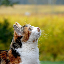 cat in the vineyard by Kaoru Arai-Lewman - Animals - Cats Portraits ( vineyard, cat )