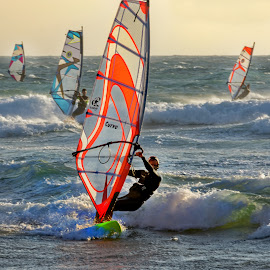 Racers by Michaela Firešová - Sports & Fitness Watersports ( windsurfers, sea, racers, windsurfing )