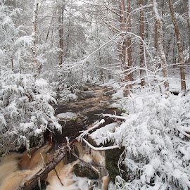 Snow covered stream in WV by Jack Nevitt - Landscapes Weather ( blackwater falls state park, trail, snow, hike, river, covered )