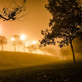 Fog by Péter Nagy - City,  Street & Park  City Parks ( lights, park, fog, grass, trees, night, nikon, evening )