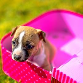 Is the cat away? by Doornkop Photos Hein van Niekerk - Animals - Dogs Puppies