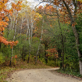 Country Road by Robert Coffey - Landscapes Forests ( autumn, fall, trees, road, gravel, rural )