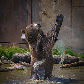 by James Harrison - Animals Sea Creatures ( grizzly bear )
