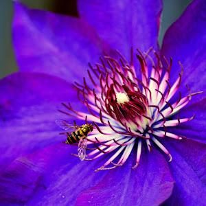 fleur 033.JPG