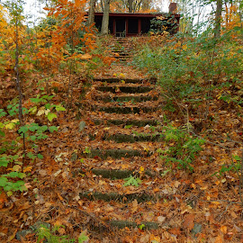Abandoned Stairway by Kristine Nicholas - Novices Only Landscapes ( orange, overgrown, grass, green, plants, house, architecture, leaf, steps, ivy, leaves, vegetation, blue sky, sky, stairs, tree, autumn, foliage, fall, trees, abandoned )