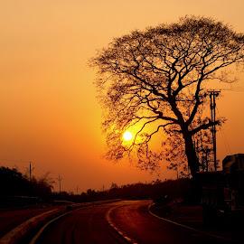 Lonely Road and sunset by Arghya Sahoo - Landscapes Sunsets & Sunrises ( road, nature, sunset, tree, landscape )