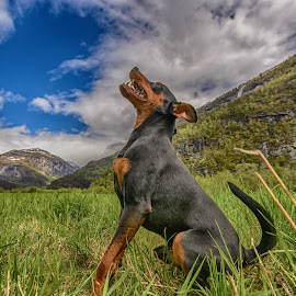 The prayer by Knut Saglien - Animals - Dogs Portraits ( pinscher-miniature, heaven, summer, dog, minpin, norway )