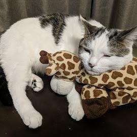 Cat nap by Rachel Riley - Animals - Cats Portraits ( snuggles, cat, snuggle, giraffe, sleep, cute )