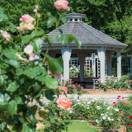 Rose Garden by Chandra Whitfield - Buildings & Architecture Public & Historical ( rose, roses, architecture, flowers, gazebo, garden, flower )