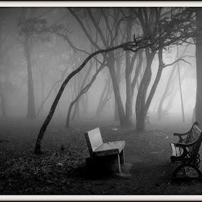 Misty Morning by Amjad Ca - City,  Street & Park  City Parks ( park, nature, trees, morning, misty )