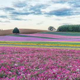 Silver Falls Seed Company by Chris Bartell - Landscapes Prairies, Meadows & Fields ( field, oregon, seed, flowers )