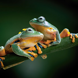 Friend Together by Robert Cinega - Animals Amphibians