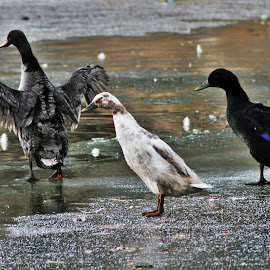 Birds of a feather by April Smith - Novices Only Wildlife