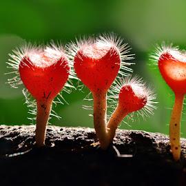 four love by Sandi Nopri yanto - Nature Up Close Mushrooms & Fungi ( love, wild, macro, nature, plants, fungus )