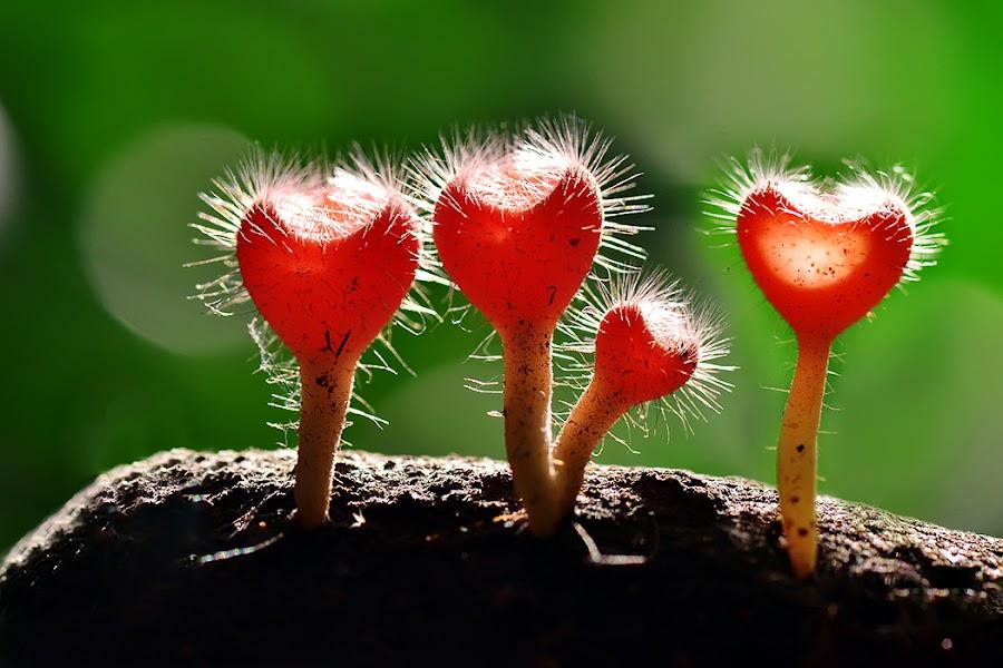 four love by Sandi Nopri yanto - Nature Up Close Mushrooms & Fungi ( love, wild, macro, nature, plants, fungus,  )