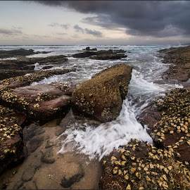 SeaScape by Hannes Kruger - Landscapes Waterscapes ( shells, sunset, waves, sea, rocks )