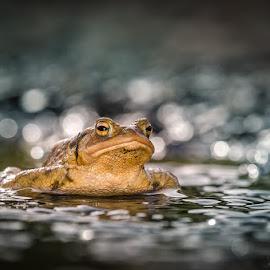 by Radek Winter - Animals Amphibians