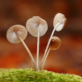 Antennes paraboliques by Gérard CHATENET - Nature Up Close Mushrooms & Fungi (  )