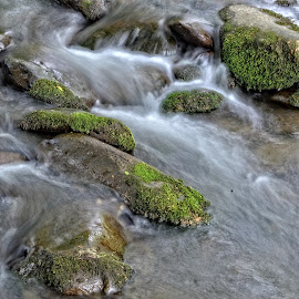 The Flowing Stream by Gregg Rich - Nature Up Close Rock & Stone ( water, stream, nature, flow, rocks )