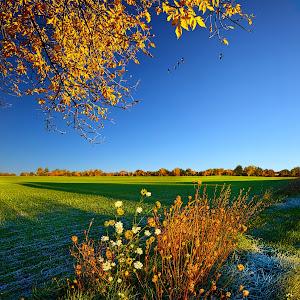 Autumn's Frost Pixoto.jpg