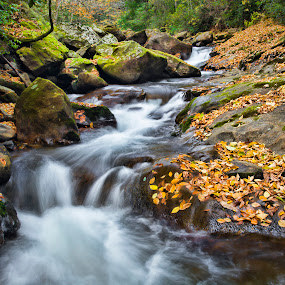 Pisgah Fall by Brian Young - Landscapes Waterscapes ( season, waterfall, creek, fall, leaves, river, steam )