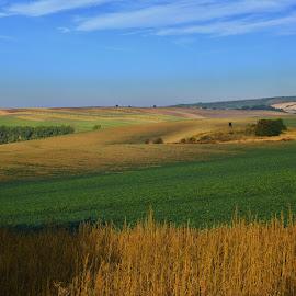 Moravian landscape by Josef Hasík - Landscapes Prairies, Meadows & Fields ( green, brown, remízek, landscape, moravian landscape )