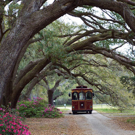 Plantation Trolley by Dale Moore - Transportation Other ( charleston, trolley, transportation, tea, plantation, south carolina )
