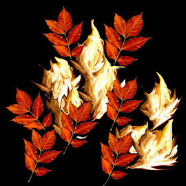 Blooming Flames by Ghazala .S. Mujtaba - Web & Apps Icons ( flames, season, blooming, colors, budding, red.yellow, 3d effect, leaves, black )