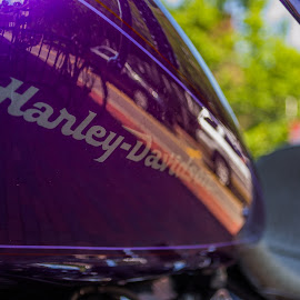Harley  by Michael Phillips - Transportation Motorcycles