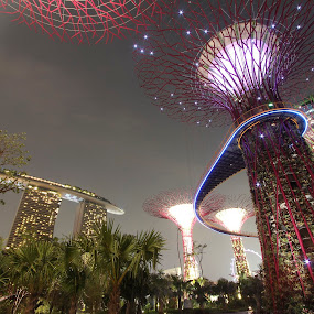 Gardens by the Bay, Singapore by Lolit Whorlow - City,  Street & Park  City Parks