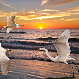 { Sunset @ Clearwater Beach ~ Egret Escape's  ~ 2 July }  by Jeffrey Lee - Digital Art Animals ( { sunset @ clearwater beach ~ egret escape's  ~ 2 july } )