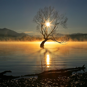 The Sun Tree by Jomy Jose - Landscapes Waterscapes ( lone tree, hannahsdreamz, tree in water, jomy jose, new zealand, wanaka tree )