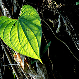 SOLITUDE by SANGEETA MENA  - Nature Up Close Leaves & Grasses