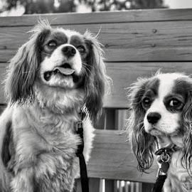 Zoey + Kime by Edward Allen - Animals - Dogs Portraits