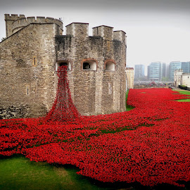 Blood Swept Lands & Seas of Red by Louise Lord - Buildings & Architecture Public & Historical ( world war ii, world war i, tower, london, fallen, poppies, tribute, blood, river )