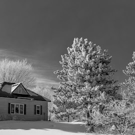Home Sweet Home by William Boyea - Buildings & Architecture Homes ( winter, cold, black and white, snow, trees, house )