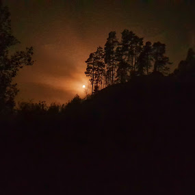 Full moon by Andreja Svenšek - Landscapes Forests ( sky, tree, night photography, mobile photos, trees, night, full moon, blood, fire, nightscape )