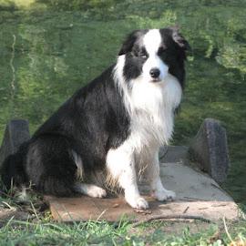 Arhie by Dusan Radikovic - Animals - Dogs Portraits