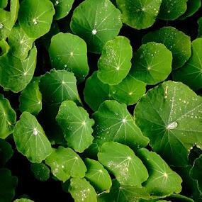 Dewdrops by Rebecca Pollard - Nature Up Close Natural Waterdrops (  )