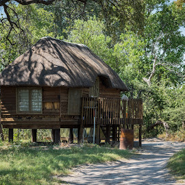 Wooden cottage on stilts with thatched roof by Nick Dale - Buildings & Architecture Homes ( grassland, botswana, building, african, hut, grass, third bridge, stilts, shack, track, windows, road, house, sunlight, savannah, thatched, wooden, nature, grassy, savanna, sunny, path, trees, sunshine, africa, moremi )
