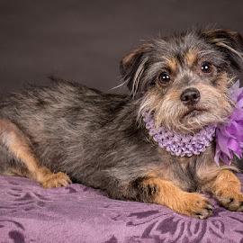 by Myra Brizendine Wilson - Animals - Dogs Portraits ( canine, foster dog, dogs, foster nadine, pet, pets, nadine, gcspca, dog, foster dog nadine, greater charlotte spca )