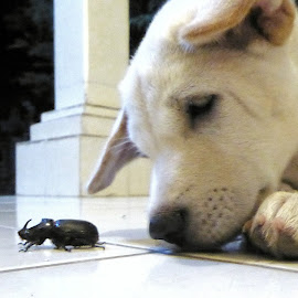 Puppy Tofu and a new friend ? by Peter Art - Animals - Dogs Puppies ( playing, home, friends, puppy, insect )