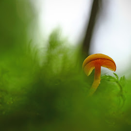 Mushroom in a beautiful environment by Sami Rahkonen - Nature Up Close Mushrooms & Fungi ( mushroom, flora, colors, ground, ghost, vegetation, landscape, close up, bokeh, macro, nature, background, summer, foreground )