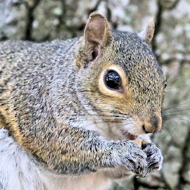 Tuesday At Zephyr Park 31 by Terry Saxby - Animals Other Mammals ( terry, florida, zephyrhills, saxby, nancy, usa, squirrel )