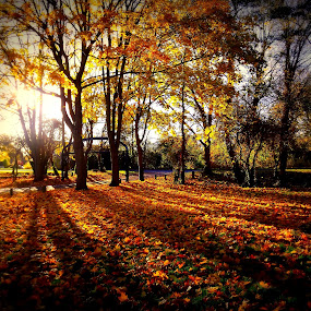 The Autumn Sunset by Charlotte Swann - Nature Up Close Trees & Bushes ( fall leaves on ground, fall leaves )