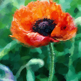 Pretty Poppy by Nancy Bowen - Novices Only Flowers & Plants ( orange flower, poppy flower, digital manipulation )