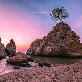 When all you need is a rock to grow by Henk Smit - Landscapes Travel