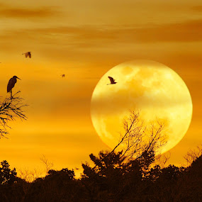 Blue Moon by Jun Santos - Landscapes Forests ( moon, sunset, sanctuary, trees, birds )
