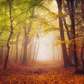 20171021-DSC_2669 by Zsolt Zsigmond - Landscapes Forests ( nature, tree, autumn, forest )