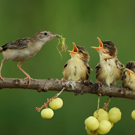Hello kids.....yum yum by Bernard Tjandra - Animals Birds